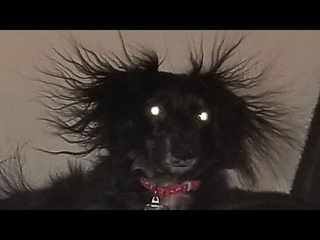 ПРИКОЛЫ С ЖИВОТНЫМИ 😺🐶 Смешные Животные Собаки Смешные Коты Приколы с котами Забавные Животные #112