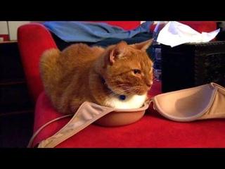 ПРИКОЛЫ С ЖИВОТНЫМИ 😺🐶 Смешные Животные Собаки Смешные Коты Приколы с котами Забавные Животные #94