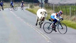 Unbelievable Animal Moments Caught On Camera! #3