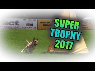 BAGSD Schutzhund Super Trophy 2017 FCI WM IPO Qualifiers Protection Rounds  Mali, GSD, Rottie
