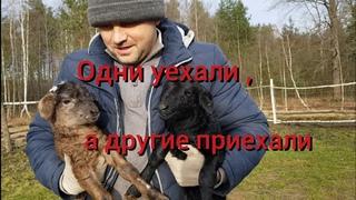 """Закон """"хутор не резиновый"""" чудом работает без человека.Вместо одних животных сразу появляются другие"""
