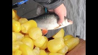 Рыбалка на ФИДЕР. Крупная плотва клюёт на каждом забросе на на ОСОБУЮ кукурузу