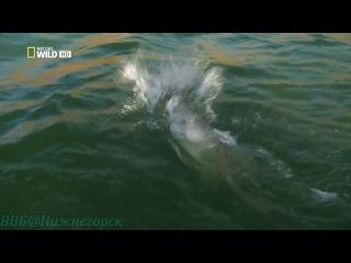 Охотник на пресноводных гигантов Нильский исполин Документальный 2010