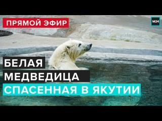 ЖИЗНЬ БЕЛОЙ МЕДВЕДИЦЫ СПАСЕННОЙ В ЯКУТИИ | прямой эфир - Москва 24