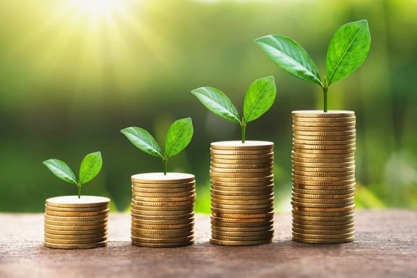 В Карелии стартовал прием заявлений от субъектов МСП и самозанятых на получение субсидий