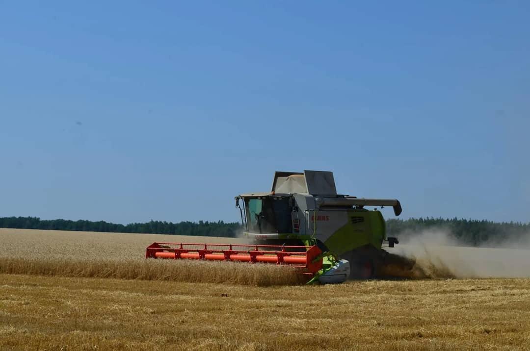 В Петровском районе озимые зерновые культуры скошены на площади 34 700 га