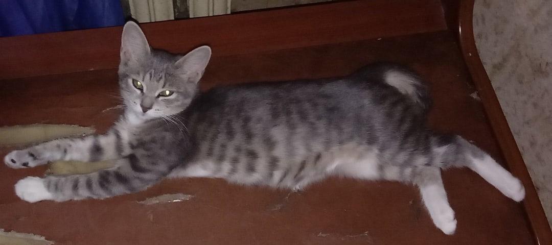 Пропала кошка 5-6 месяцев в пролетарском районе ул Металлургов остановка Кинотеатр Искра. Убежала 13 октября... Тула